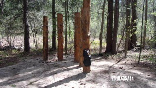 Trail 3